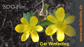 Winterling-Logo